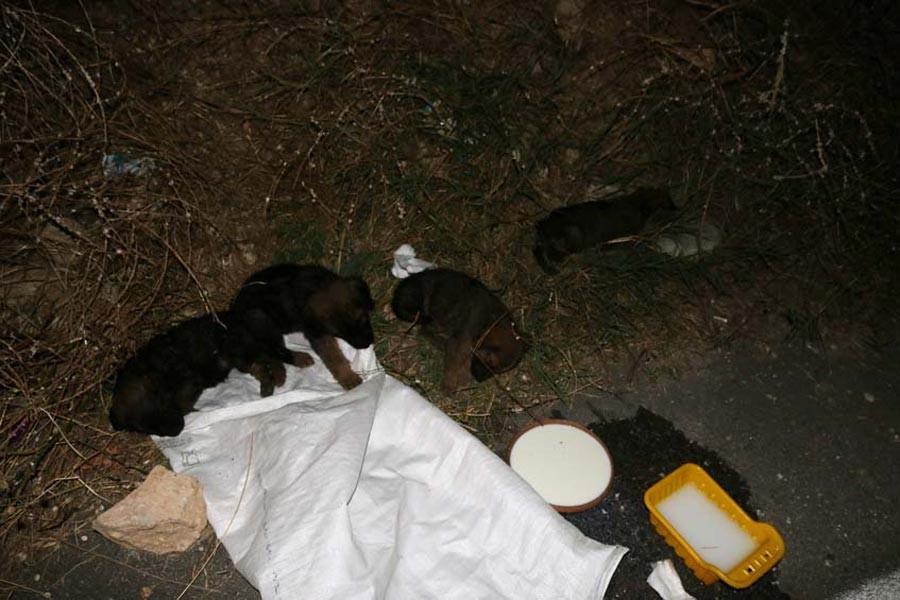 Sakarya'da çuvala bağlanmış 4 yavru köpek bulundu