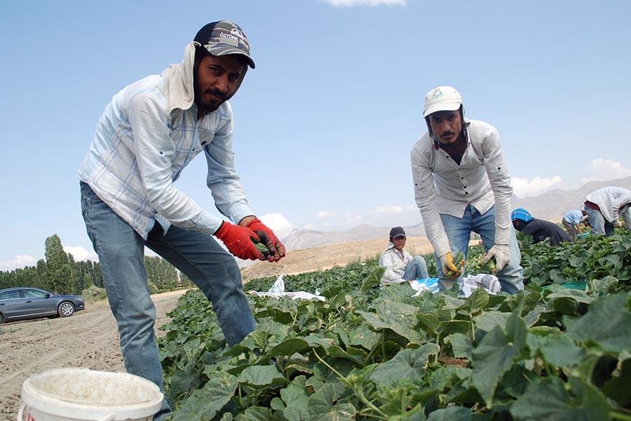 Mevsimlik işçilerin çile sezonu: 6 ayı çadırda geçiriyorlar