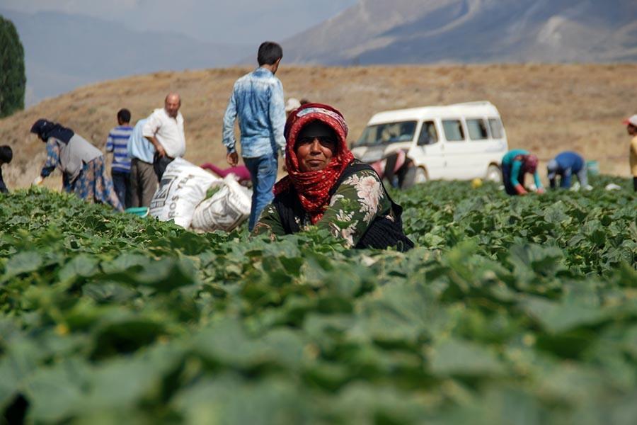 Tarımda üretim maliyetleri bir yılda yüzde 30 arttı