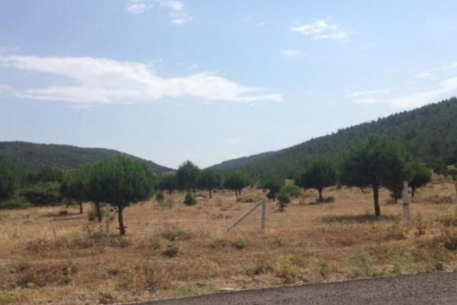 İzmir'de zeytinlikle çevrili ormana maden ocağı için onay verildi