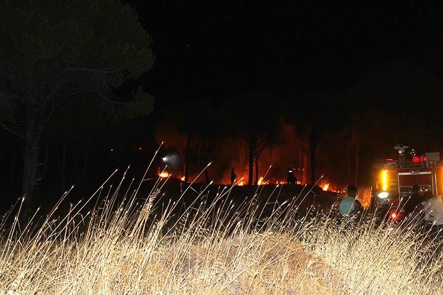 Ayvalık Cennet Tepesi'nde çıkan yangında 5 dekarlık alan yandı