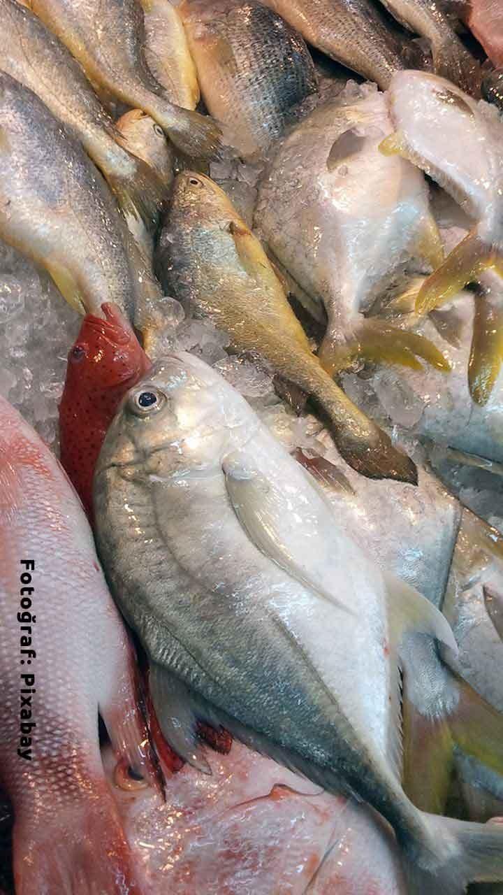 Torik Nasıl Bir Balıktır