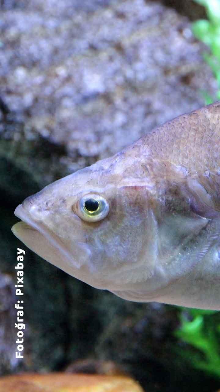 Şubat Ayında Hangi Balık Çeşitleri Yenir