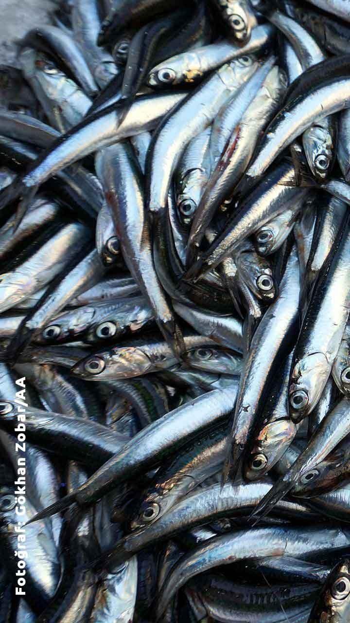 Mayıs Ayında Hangi Balık Çeşitleri Yenir