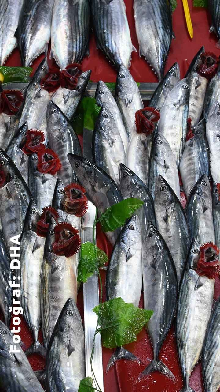 Haziran Ayında Hangi Balık Çeşitleri Yenir