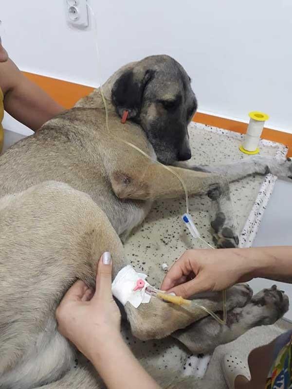 İzmir'de Köpeği Vuran Polis Hakkında Soruşturma Başlatıldı