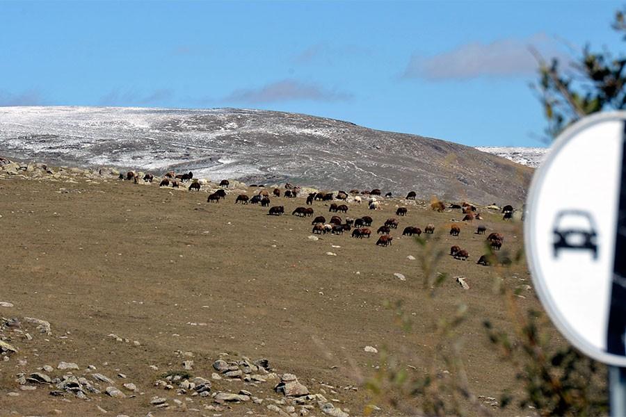 Ardahan'da mevsimin ilk karı yağdı