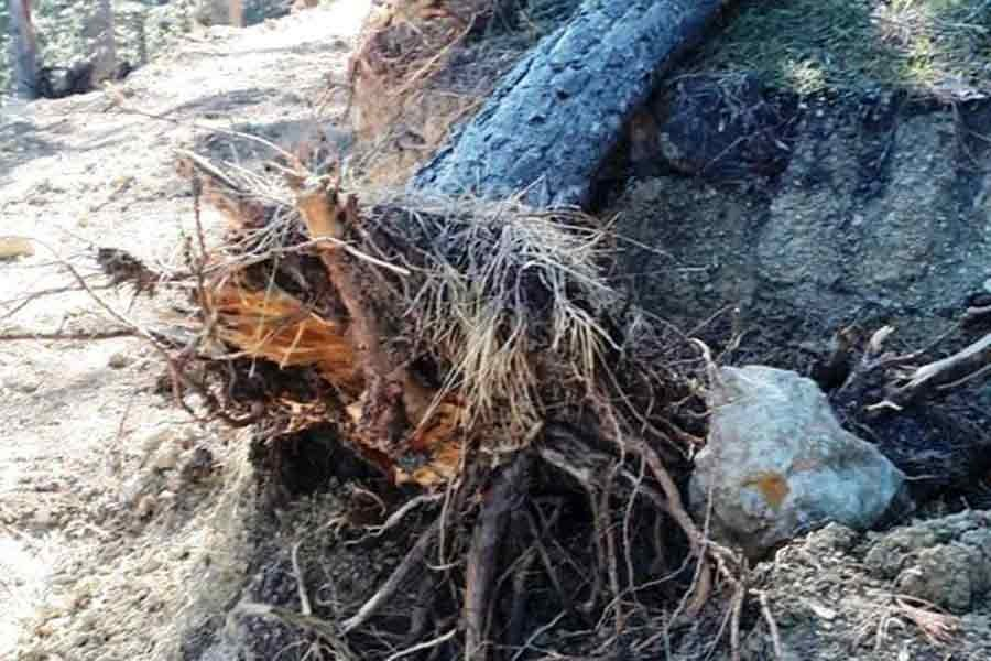 Isparta Tota ormanlarındaki ağaç katliamı tepki çekti