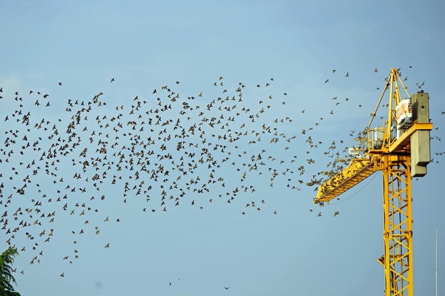 Kuşlar dünya için can yeleği