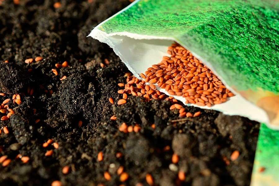Yerel tohumlar hepimizin kimseye devredemeyiz!