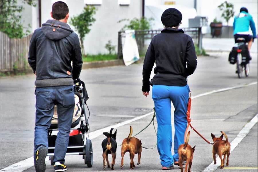 Çin'de köpekler kamuya açık yerlerde gezdirilemeyecek