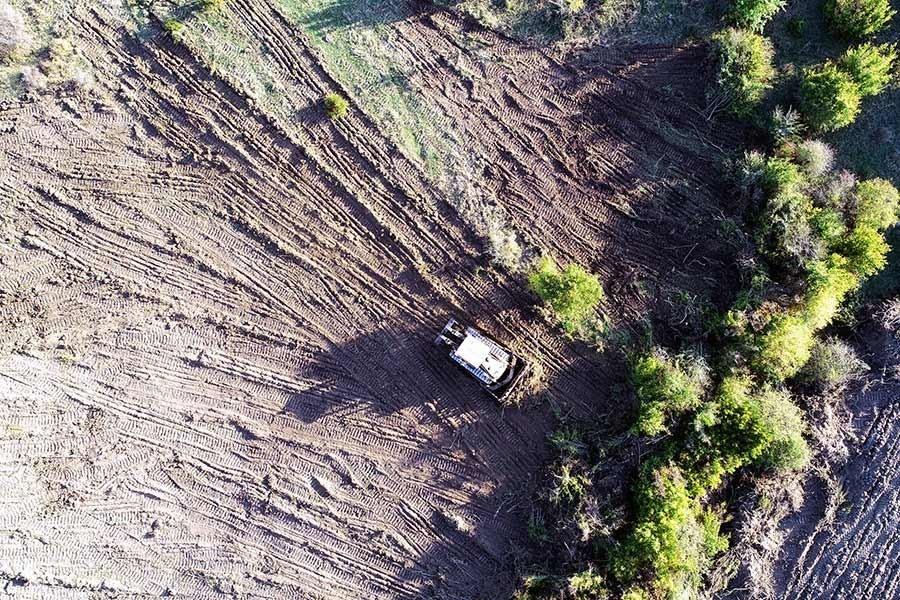 Malkara'da ormanı kiralayıp ağaçları söküyorlar