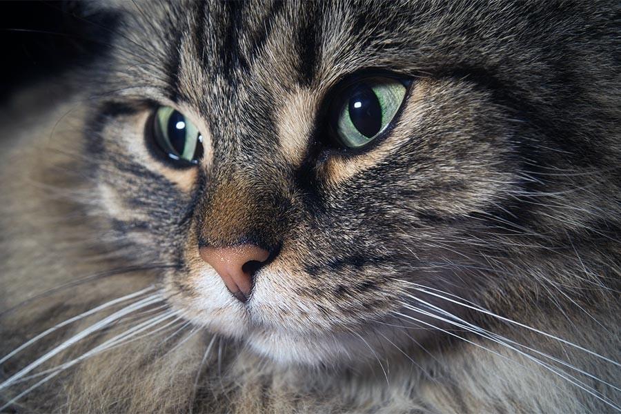 Kedileri besleyen yaşlıya rekor ceza: Cenaze parası kalmadı