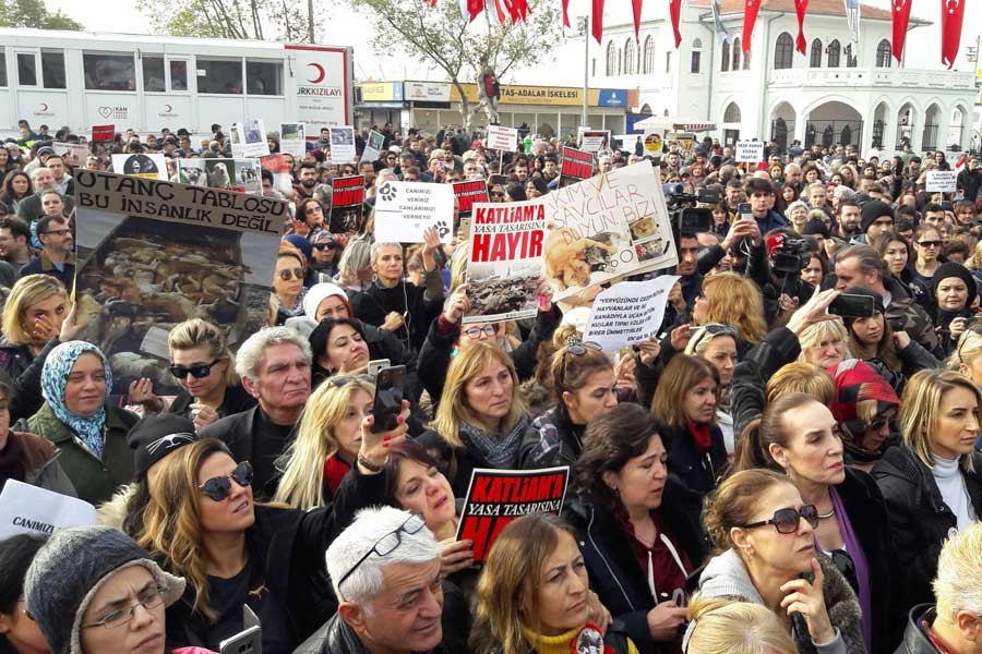 Hayvana şiddete karşı AKP önerisi: Muhammed'in hayvan sevgisini anlatalım