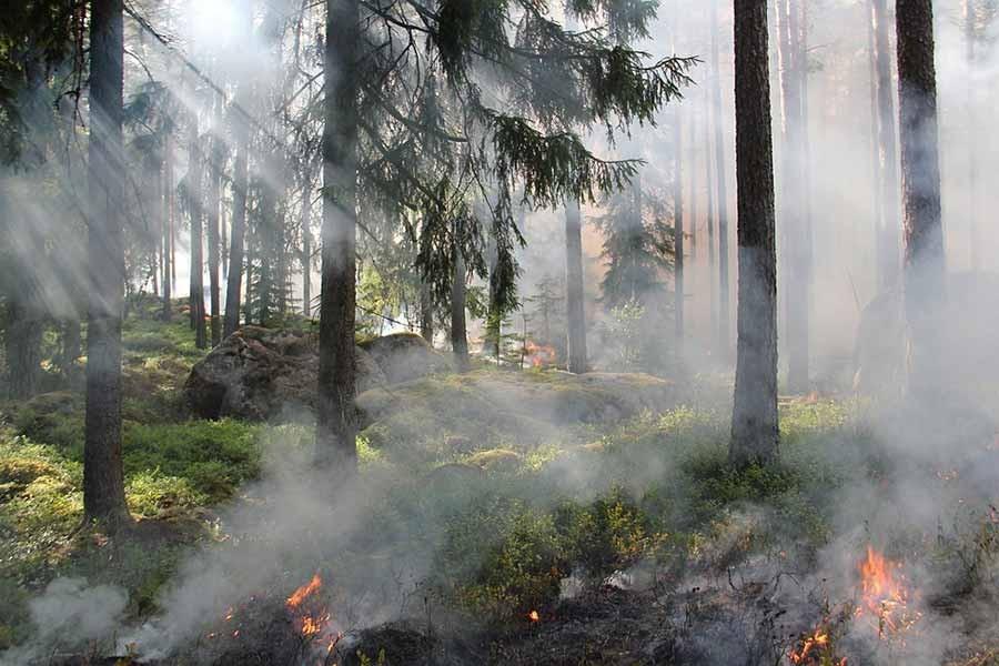 Avustralya'da yangın alarmı: 8 bin kişiye 'Evinizi boşaltın' çağrısı