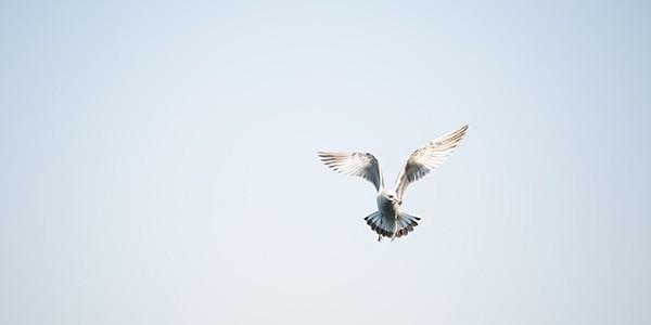 Uçmanın evrimi