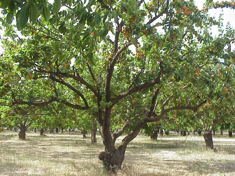 Bir halkı tanımaya ağaçlarından başlamak