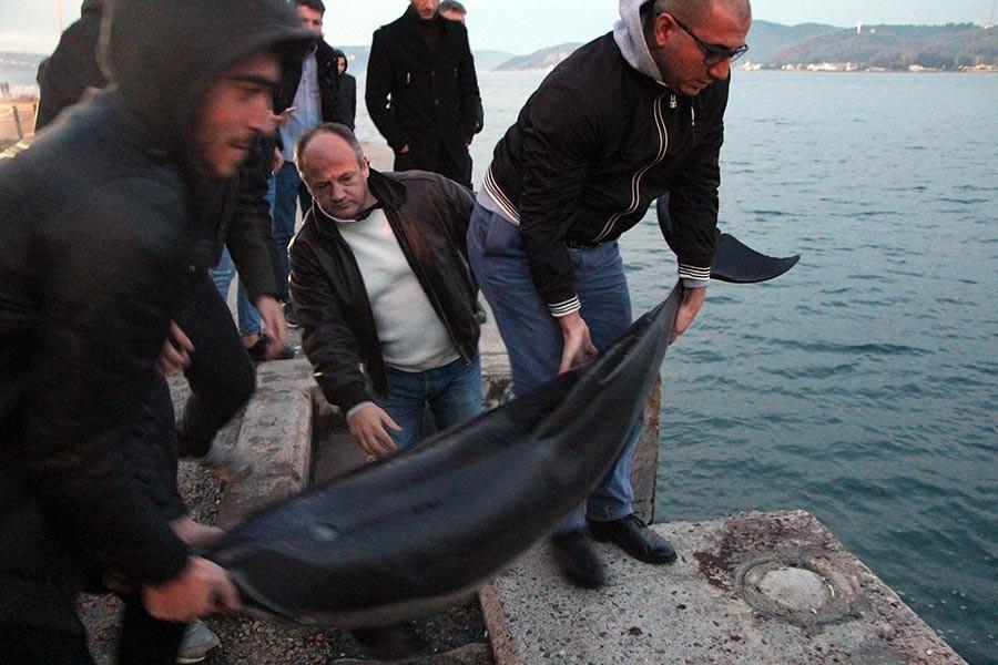 İstanbul Tarabya sahilinde ölü yunus bulundu