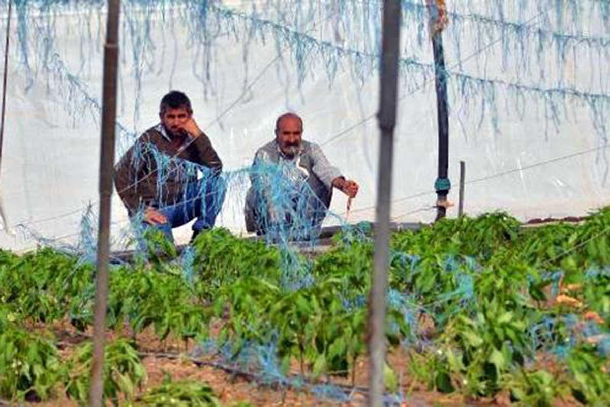 Tarım politikası bir avuç insanın çıkarına uyuyor: Üretici borçlu, seralar boş