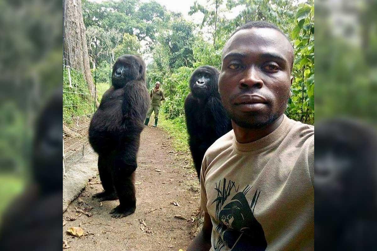 'Goril selfiesi' 50 bin dolar bağış getirdi