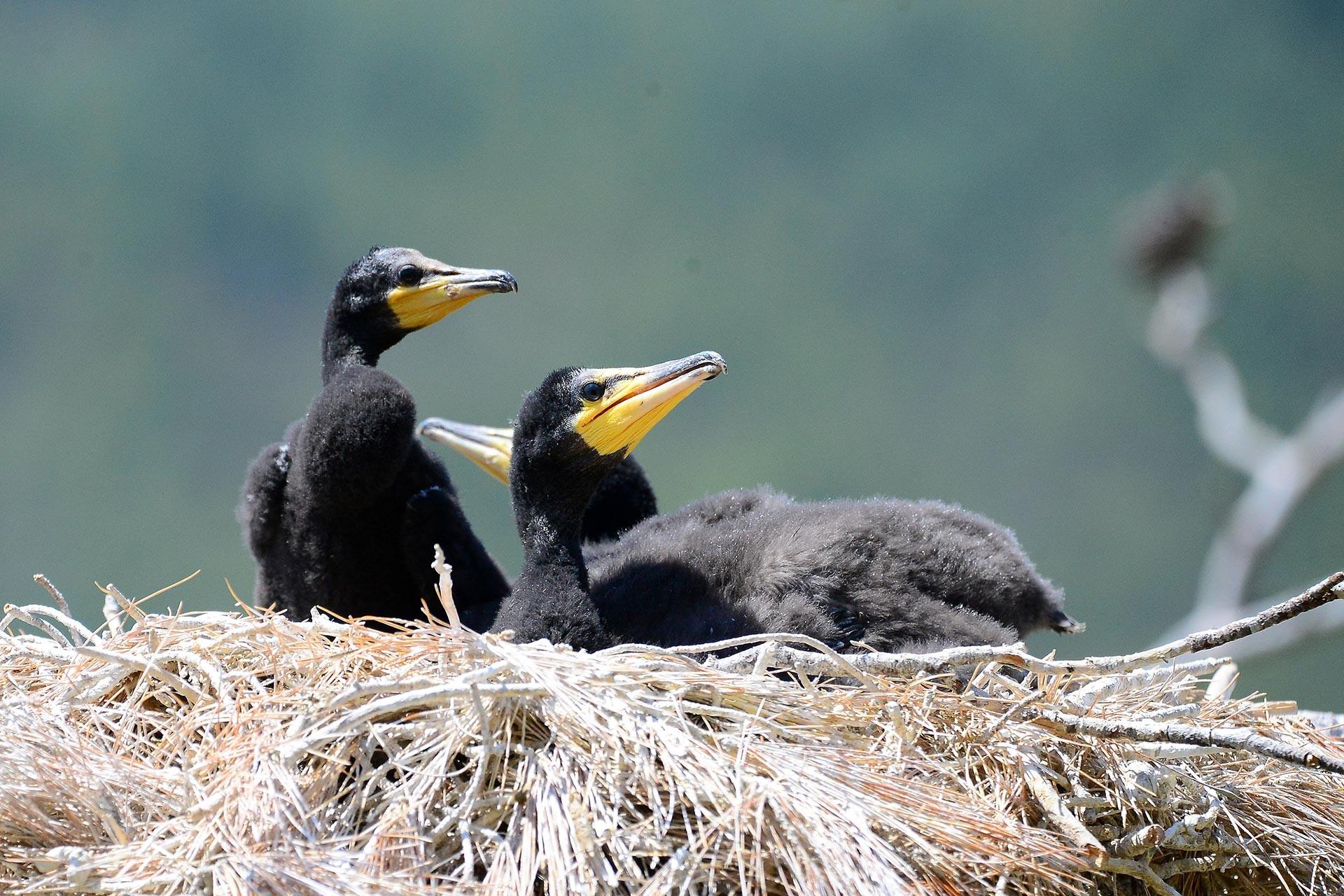 'Saklı cennet'te kuş sayısında rekor artış gerçekleşti