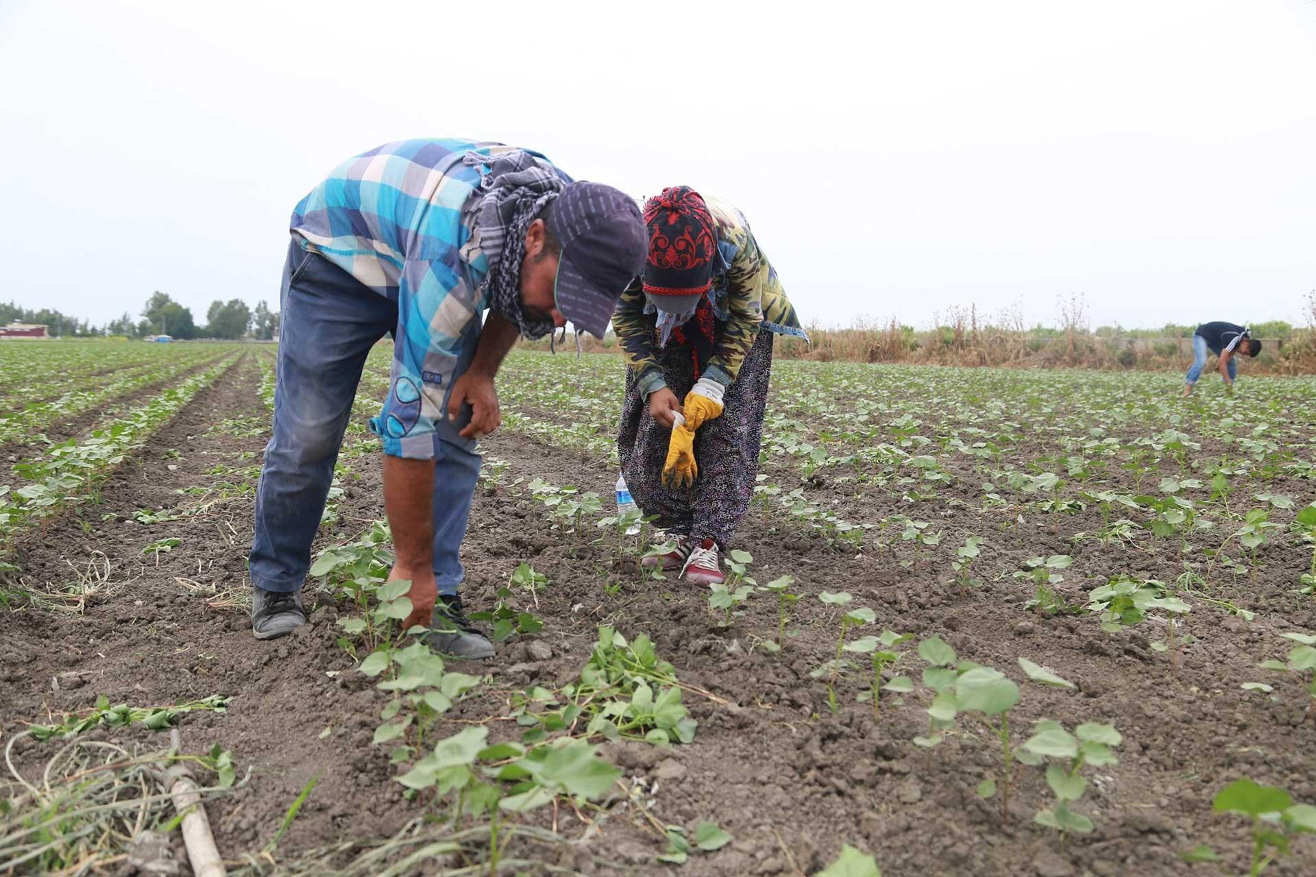 Mevsimlik tarım işçileri aldıkları yevmiyeyle geçinemediklerini anlattı