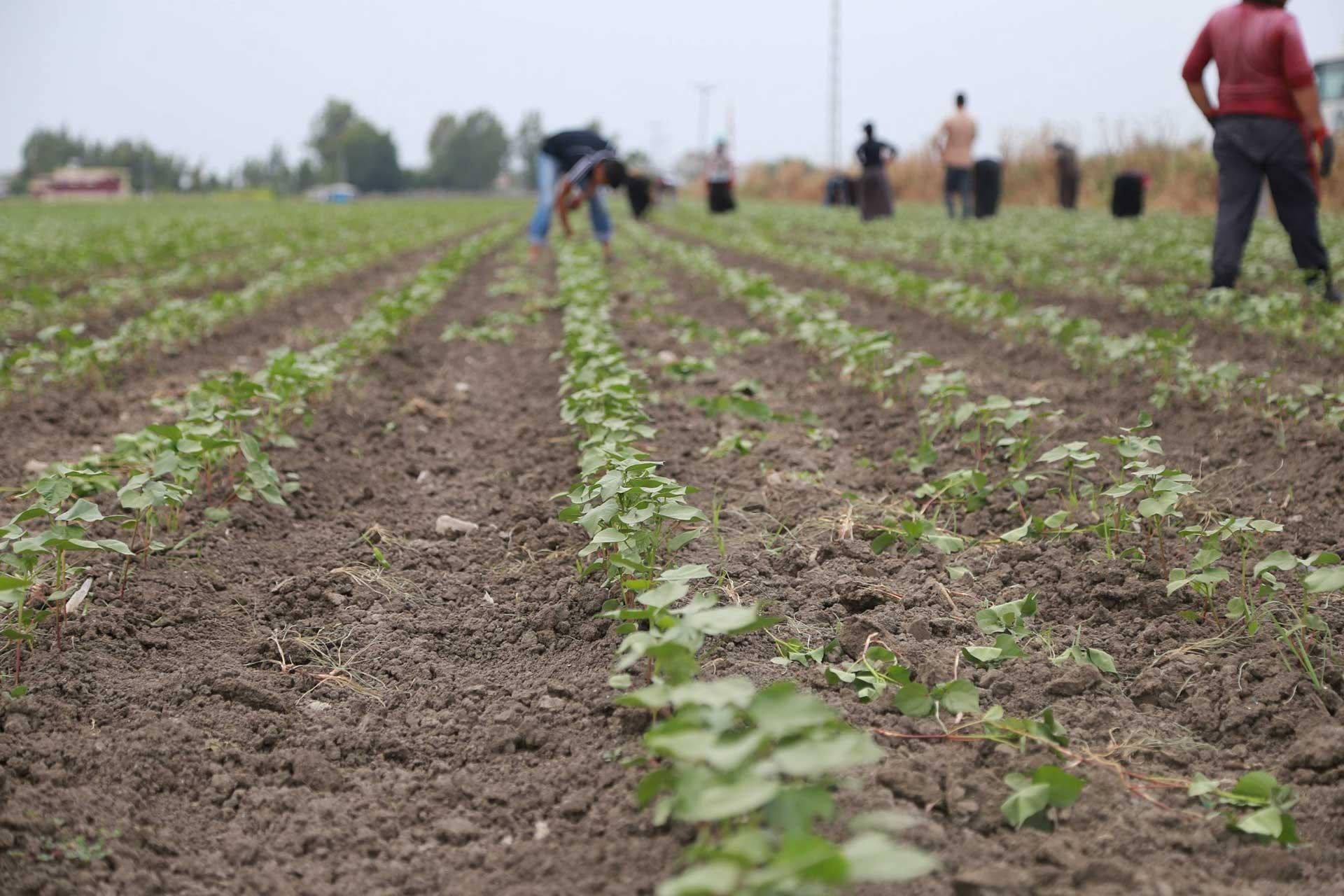 Tarımsal üretim maliyetlerindeki artış TBMM'ye taşındı