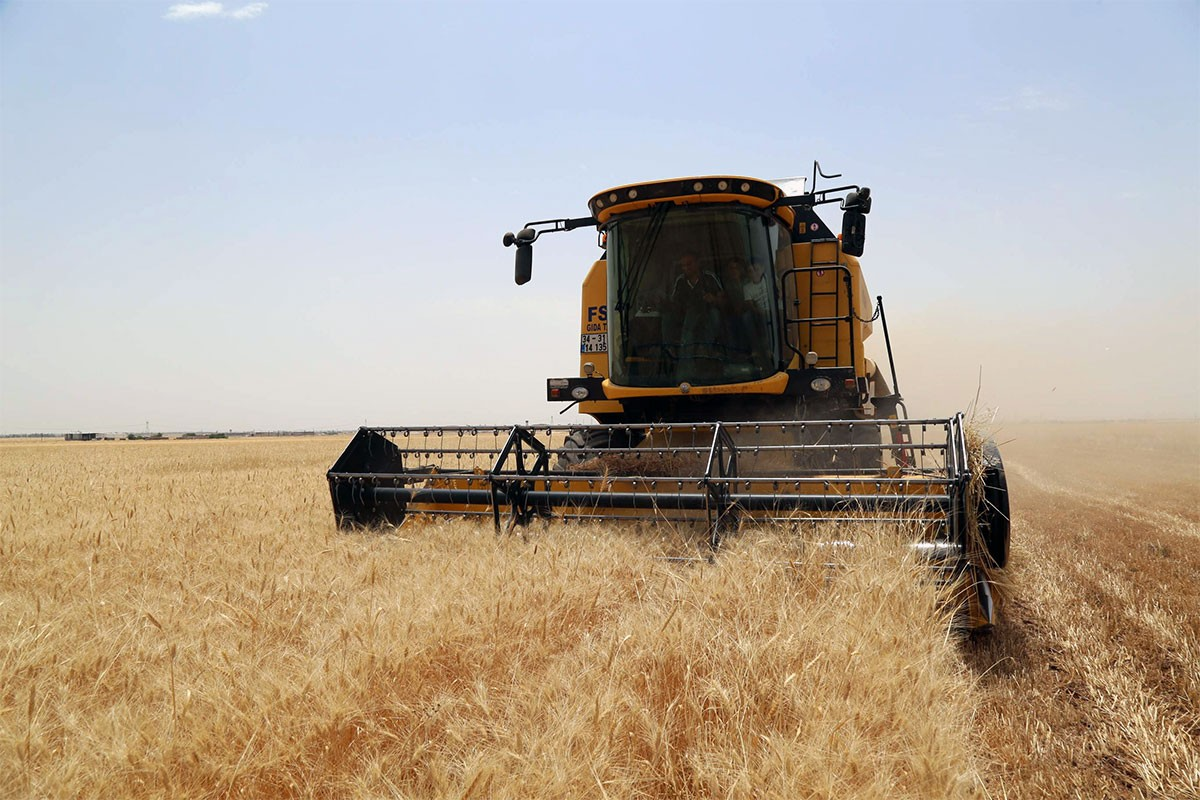Buğday hasadı gecikmeli başladı, üretici maliyeti çıkaramıyor