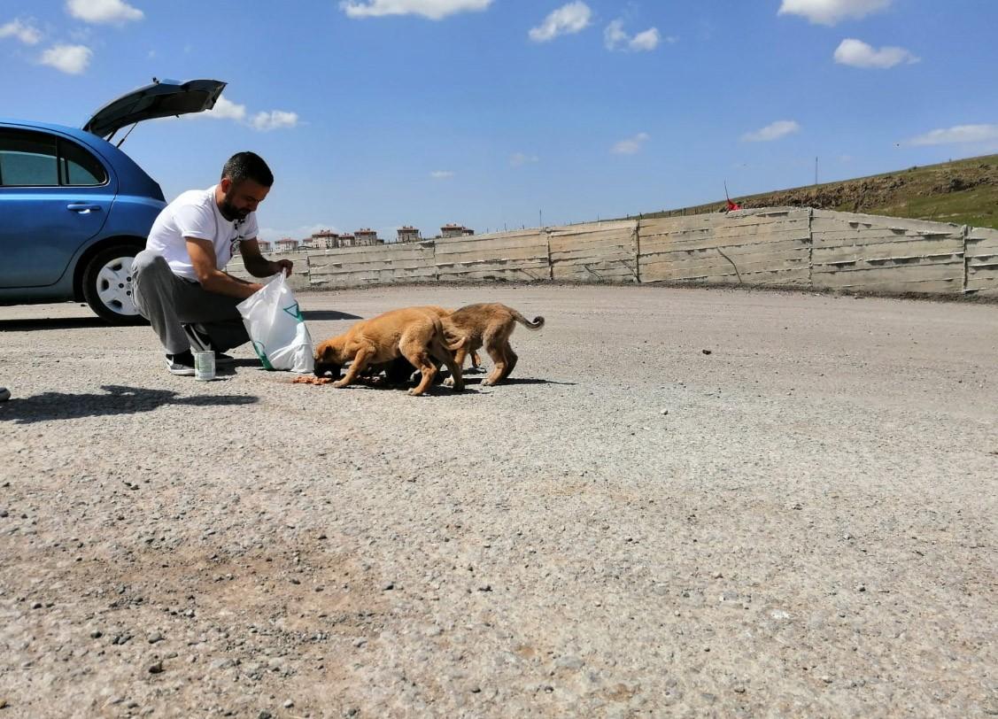 PADER Yönetim Kurulu Başkanı Alper Karmış: Cezasızlık hayvana şiddeti artırıyor