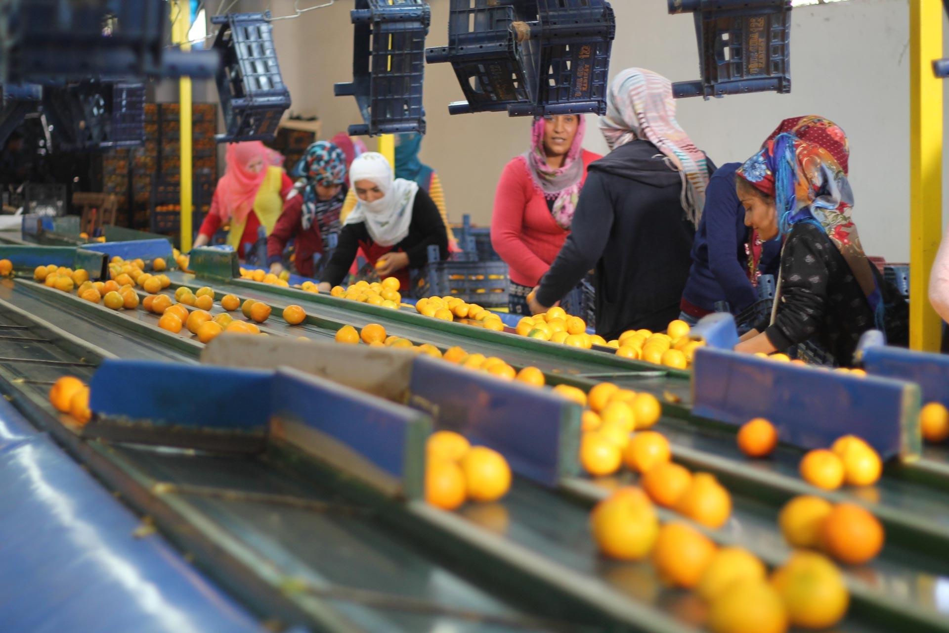 CHP'li Ayhan Barut: Üretim maliyeti yükseliyor, çiftçinin ürünü değer bulmuyor