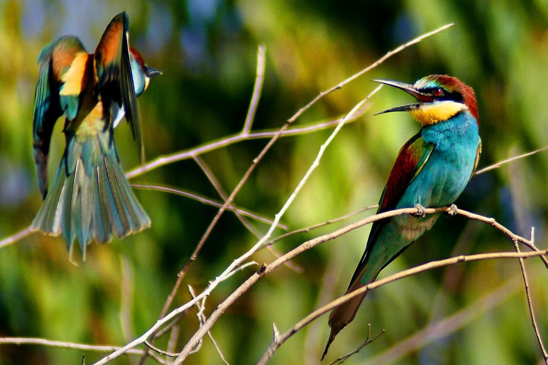 Kırmıtlı Kuş Cenneti'nde tuzakla yapılan kuş katliamı tepki topluyor