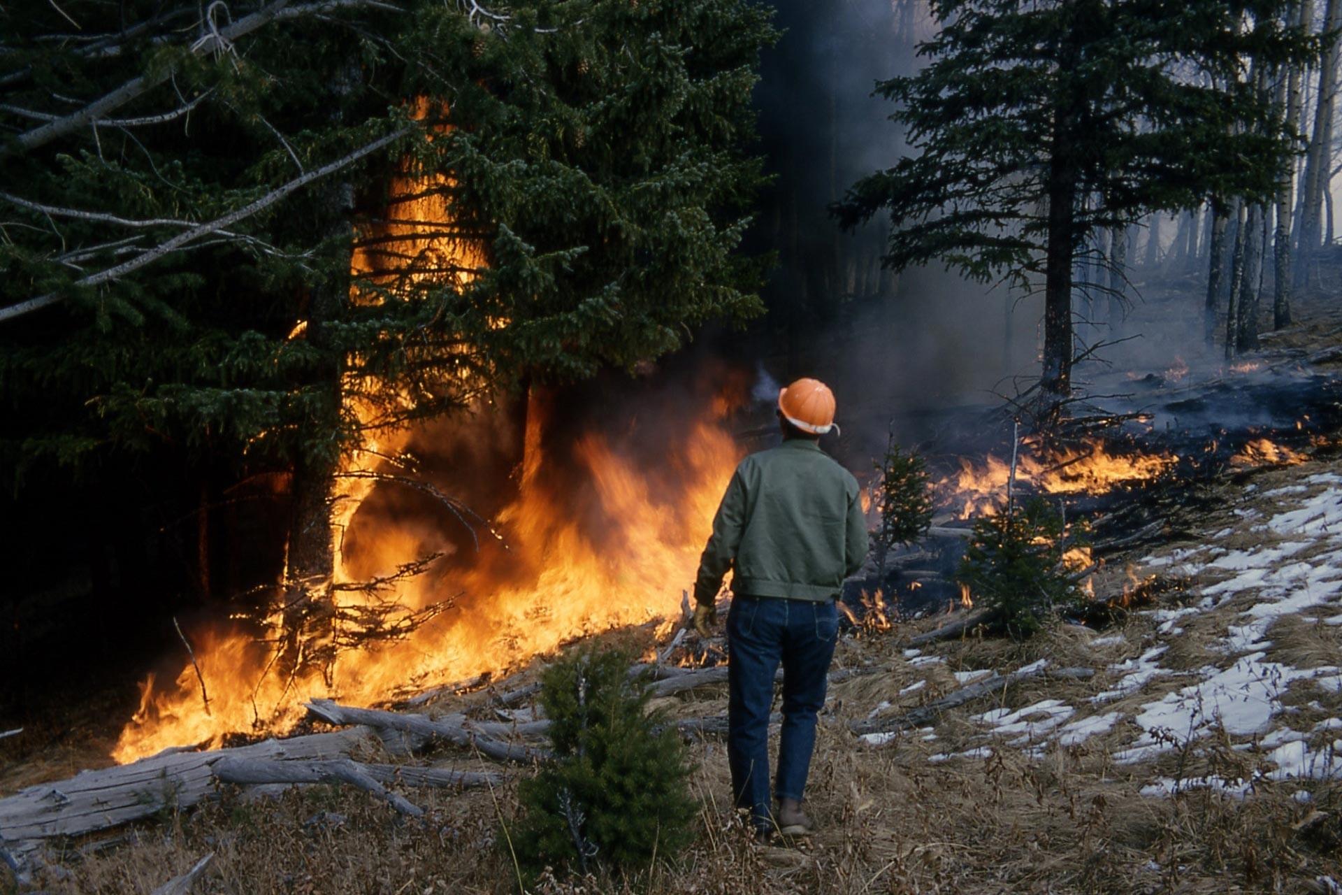 4 binden fazla orman işçisinin görevine son veriliyor
