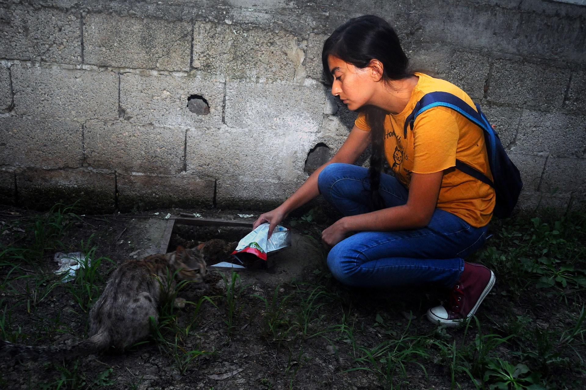 Sokak kedilerini besleyen genç kadın darbedildi