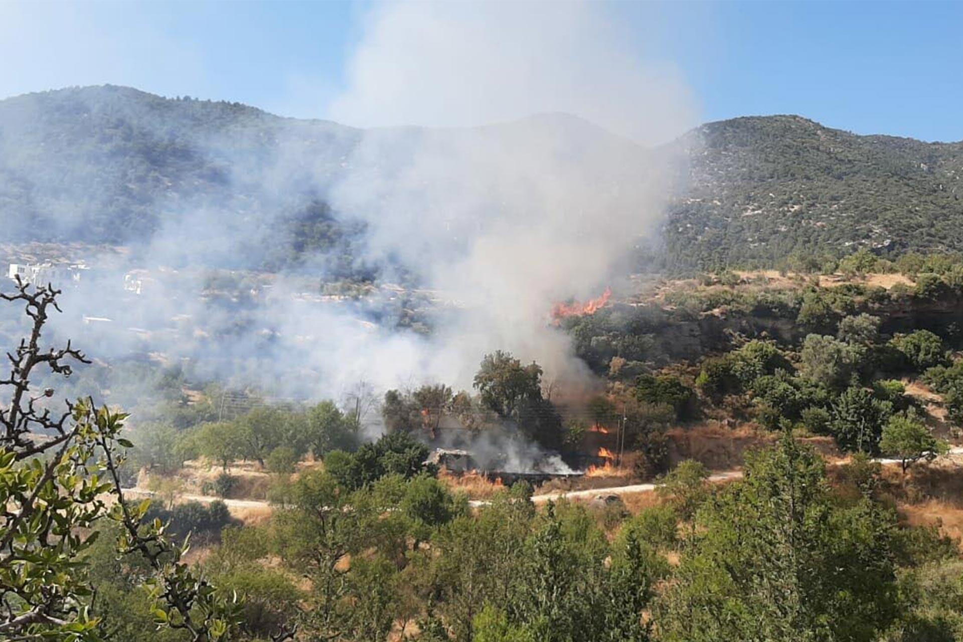 Datça'da zeytinlik alanda yangın çıktı