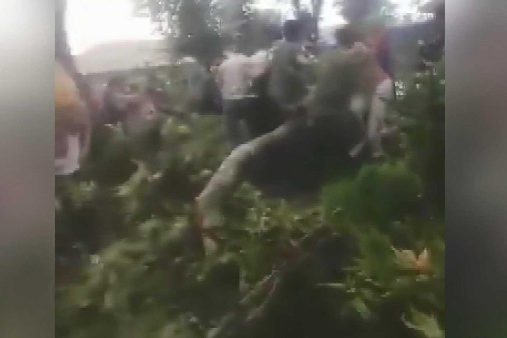 Azerbaycan'da 500 yıllık ağaç devrildi: 19 yaralı
