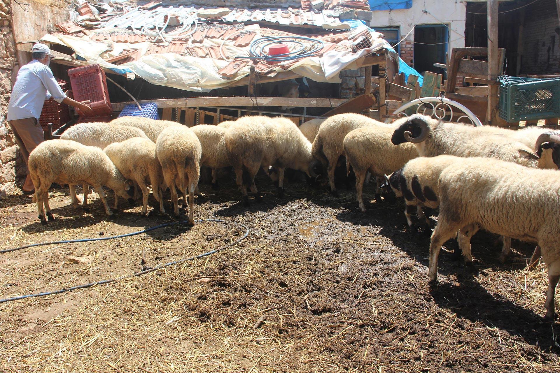 Bergama'da veba şüphesiyle 20 mahalleye hayvan giriş ve çıkışı yasaklandı