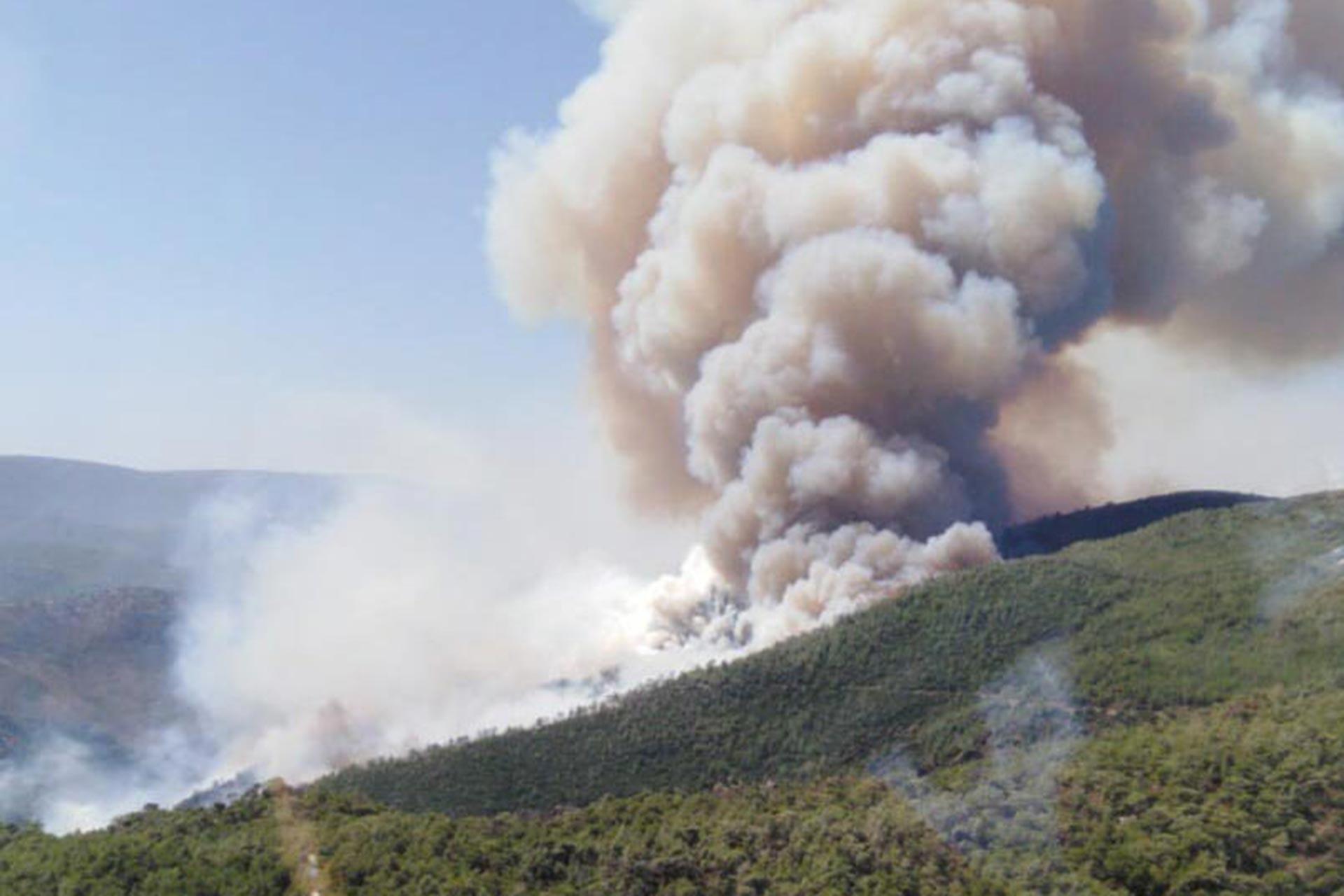 Milas'ta Akgedik Barajı'nın çevresindeki çamlıkta yangın çıktı