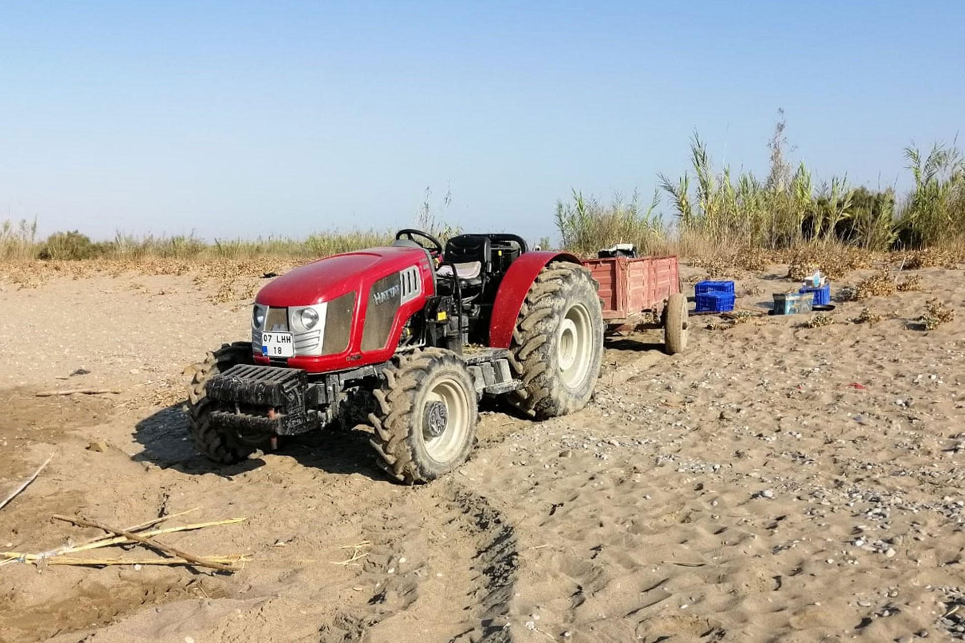 Caretta caretta sahiline traktörle girdi, uyaranlara 'Sizi buraya gömerim' dedi