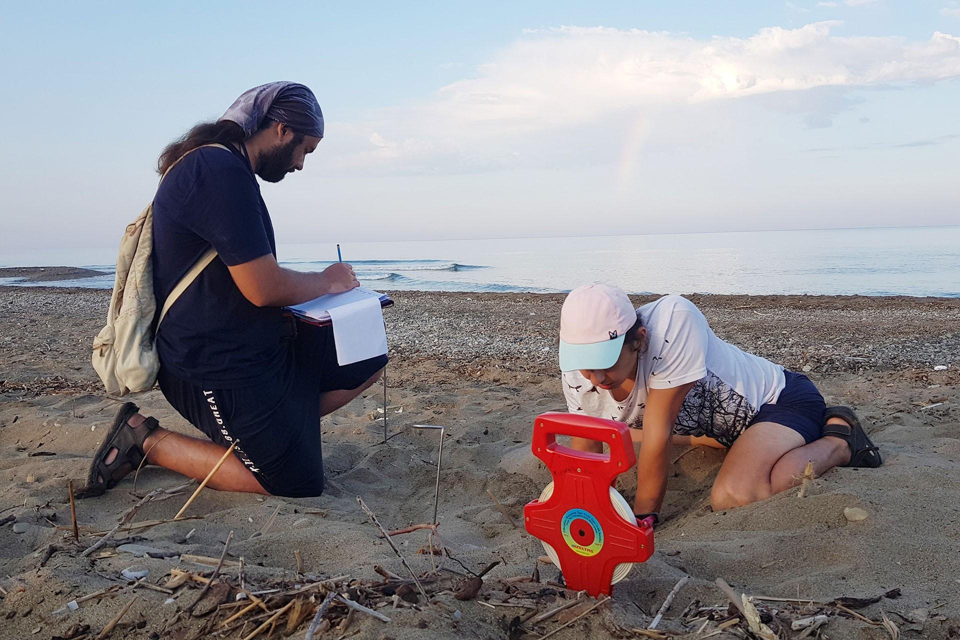 Gönüllüler, kaplumbağa yuvaları ile çıkan yavruların sayımını yapıyor.