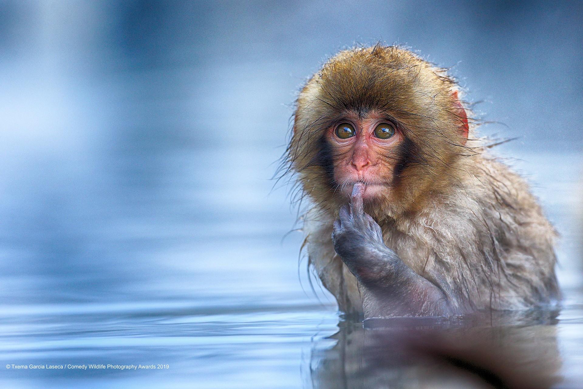 Kar maymunu