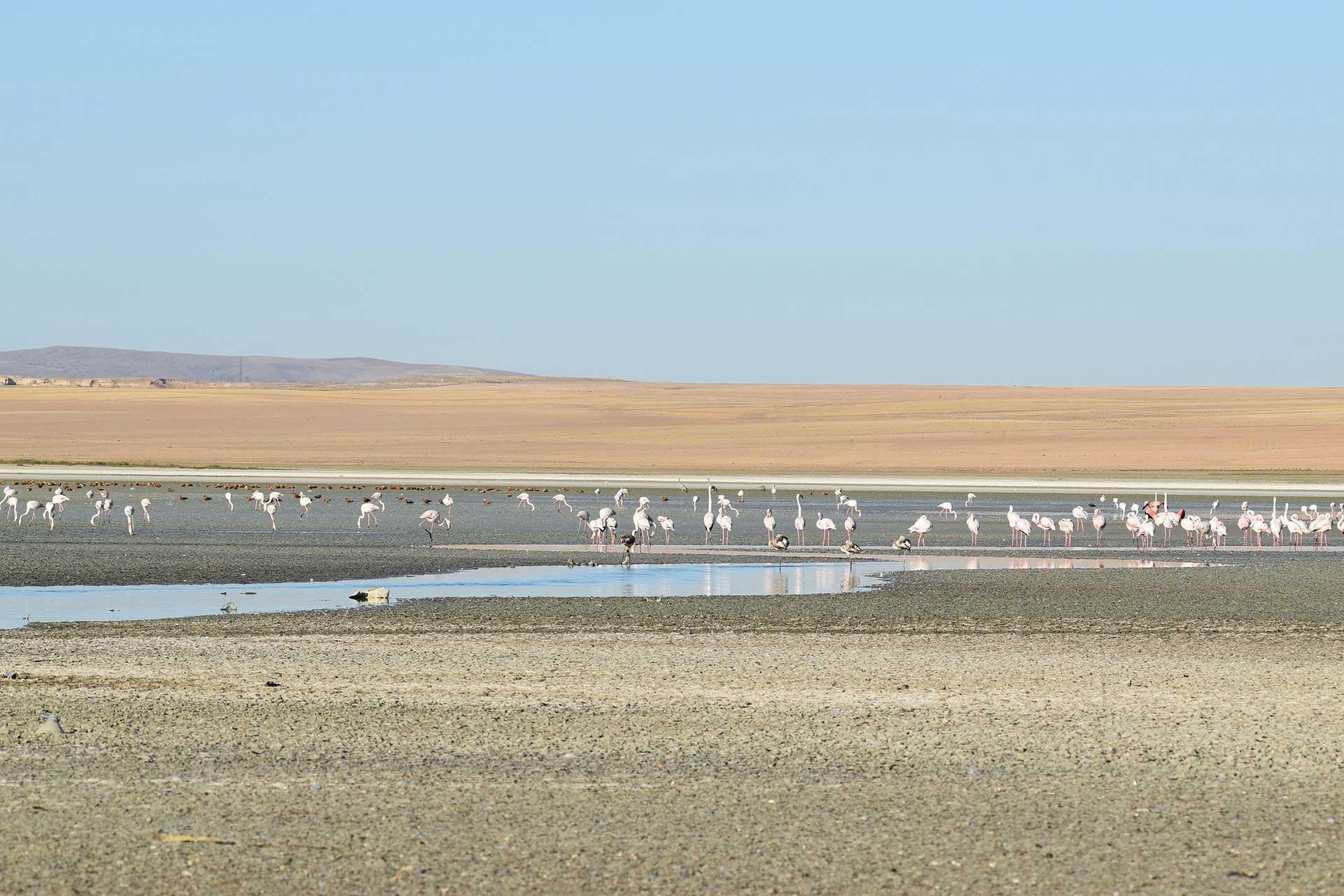 Flamingoların yaşam alanı daralıyor: Düden Gölü'nde kuraklık yaşanıyor