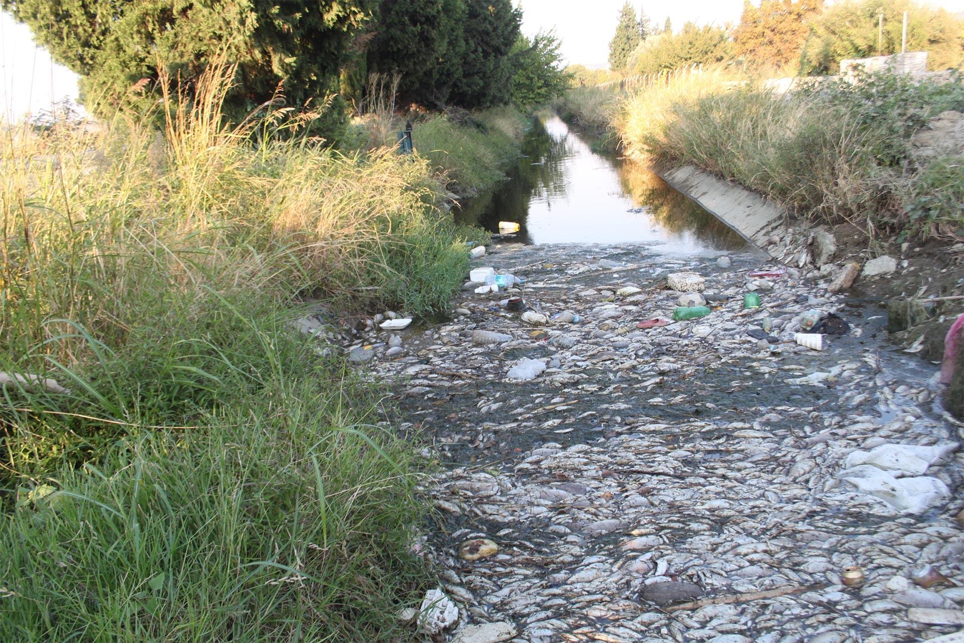 Gediz havzasında balıklar ölüyor, kent halkı endişeli