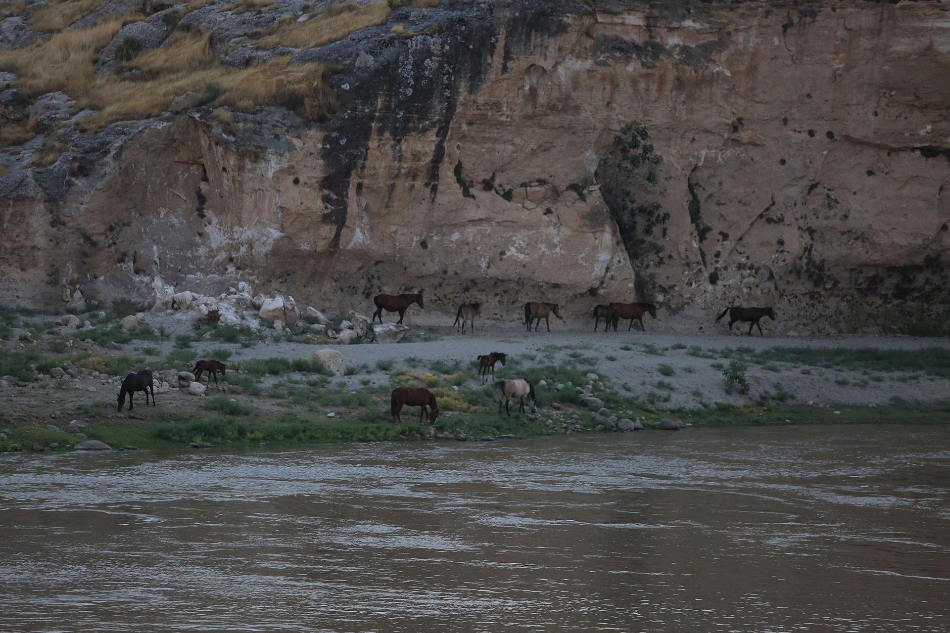 Ilısu Barajı'ndan yaban atları da etkilenecek
