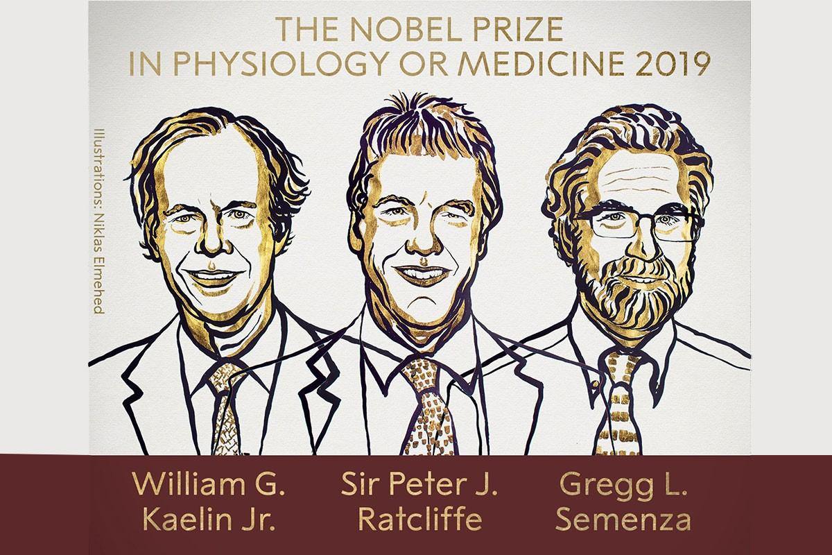 2019 Nobel Tıp Ödülü; Kaelin, Semenza ve Ratcliffe'e verildi