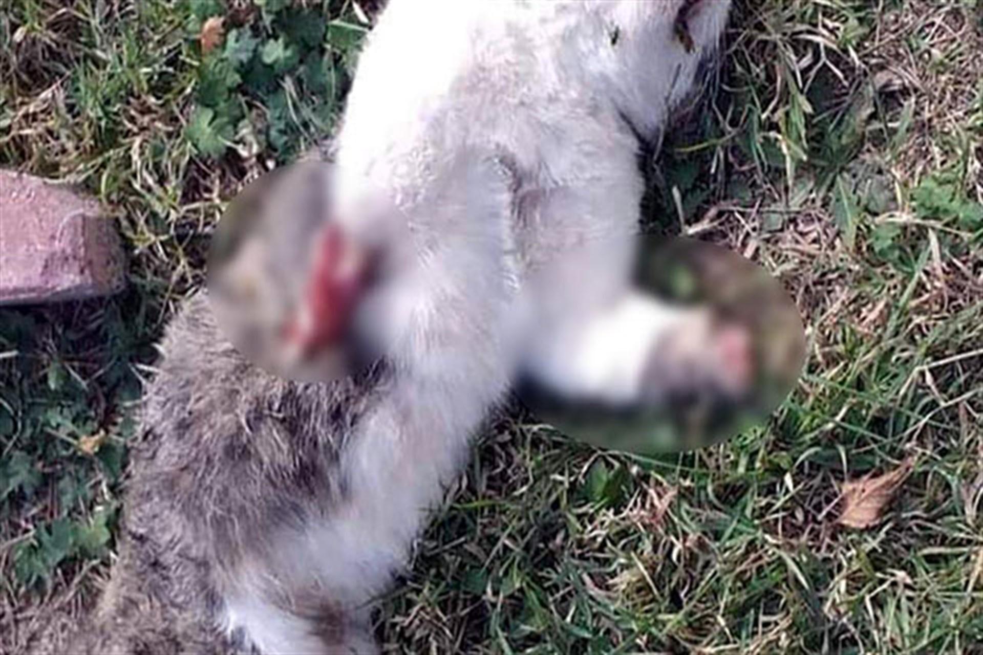 Bolu'da 2 kedinin ayakları kesik cansız bedeni bulundu