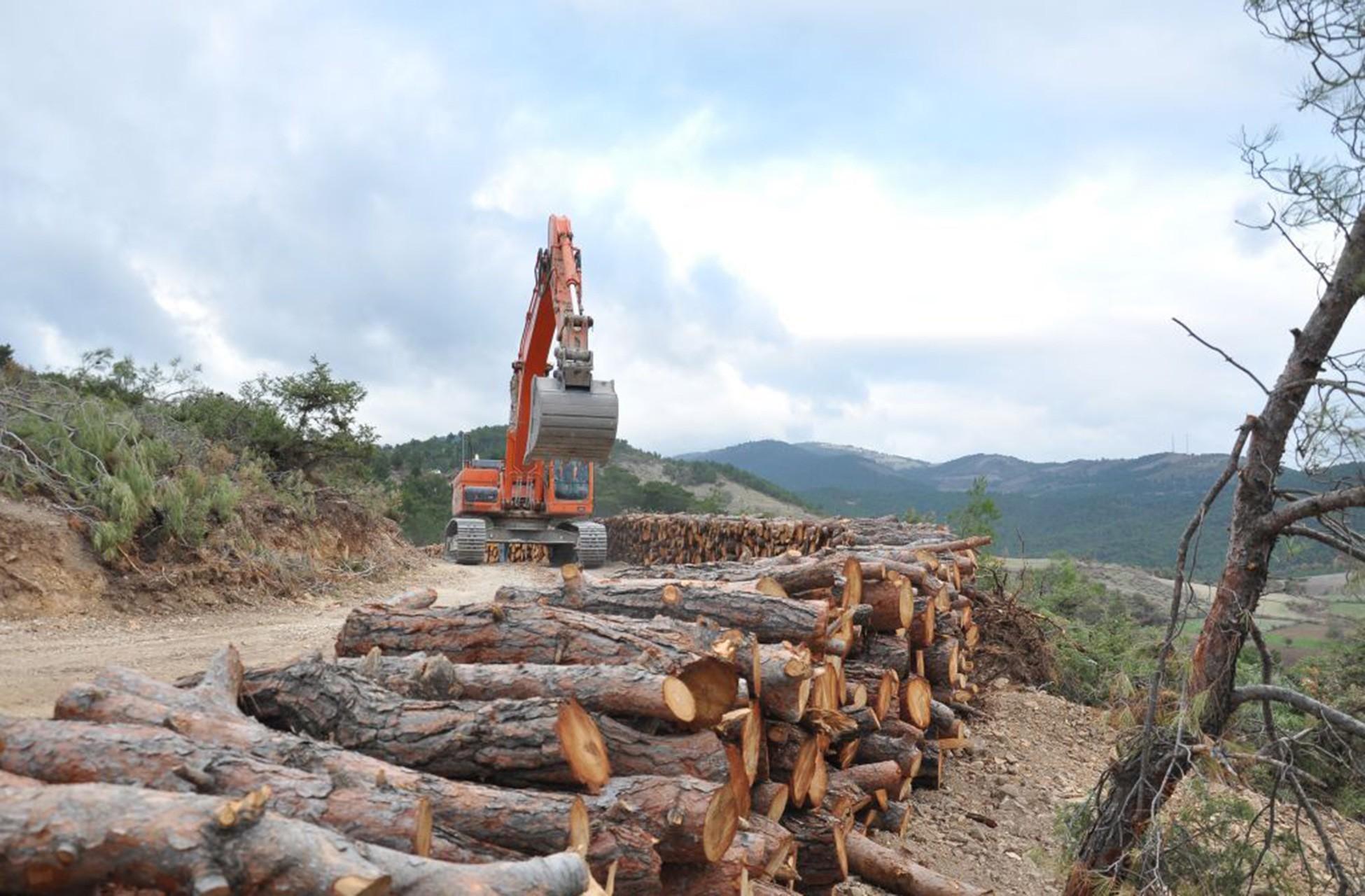 toprak yolda çalışma yapan dozer ve yol kenarında kesilmiş ağaç kütükleri.