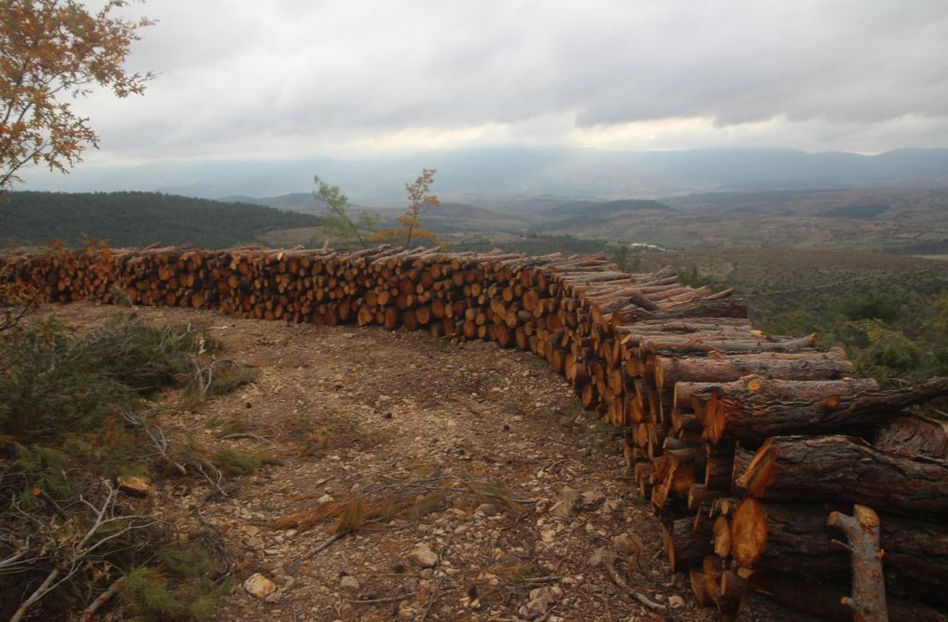 Üst üste dizilmiş ağaç kütükleri.