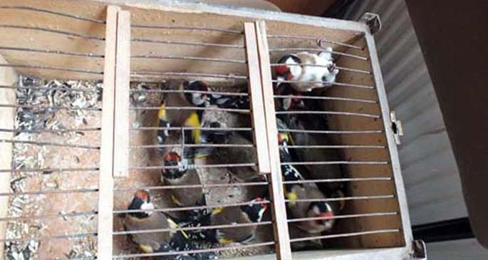 Saka kuşu avcısına 8 bin 181 lira ceza