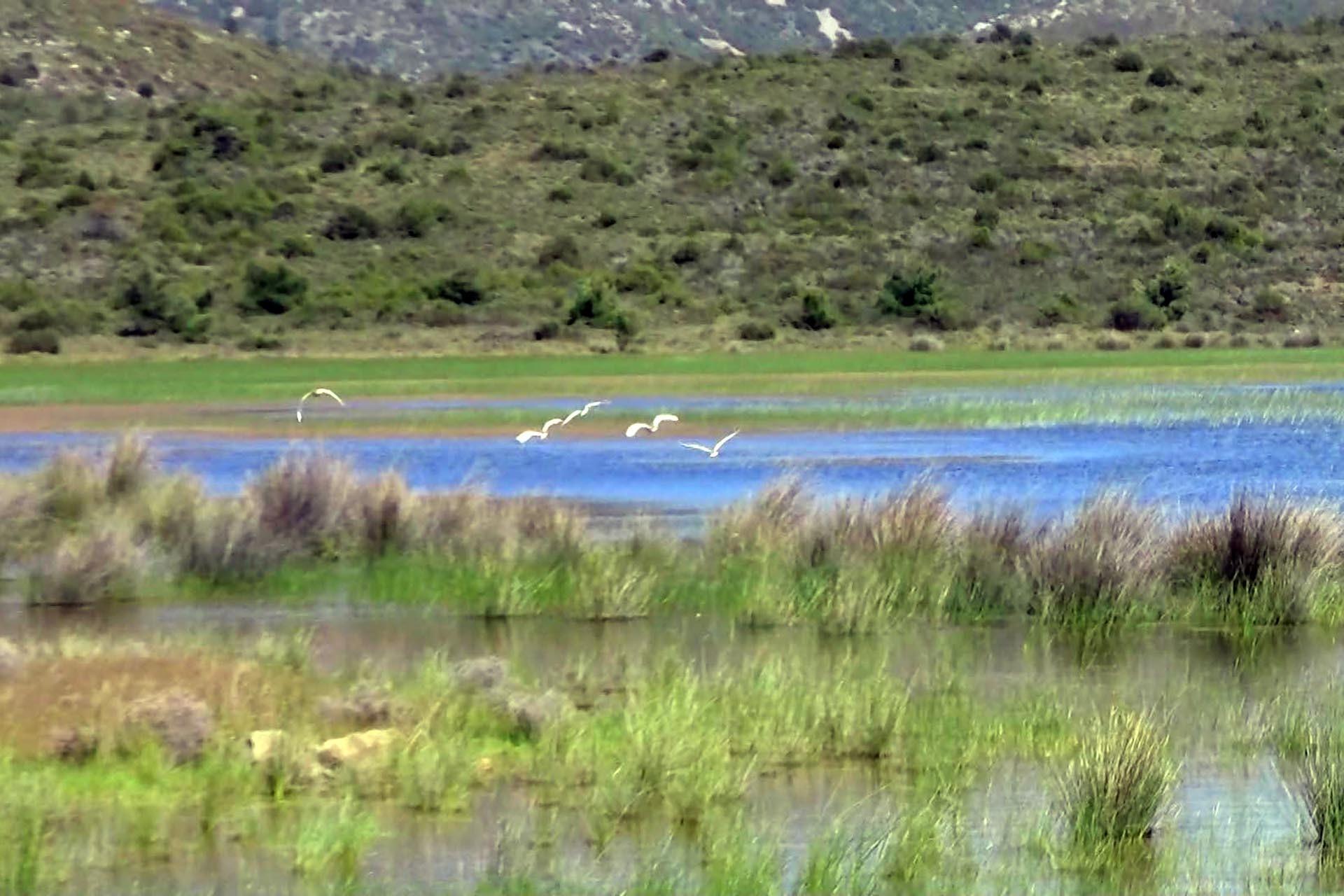 İris Gölü ve üzerinde uçan kuşlar