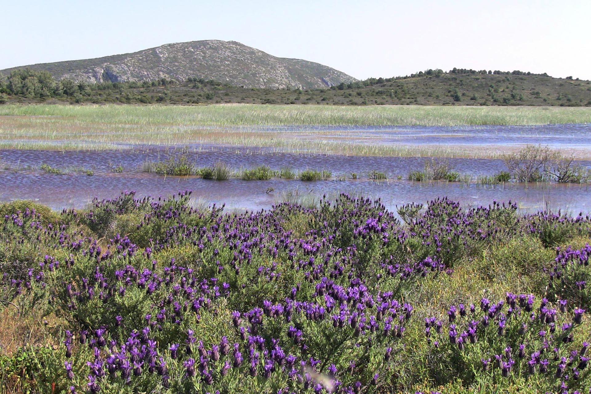 İris Gölü